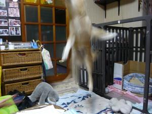 Jump_l_2